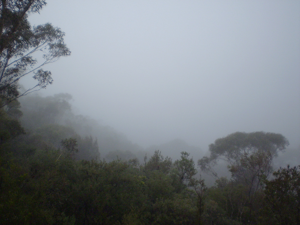 The Foggy View