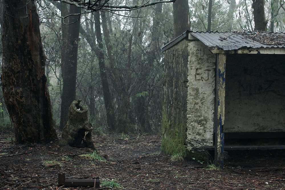 The Shack in the Woods